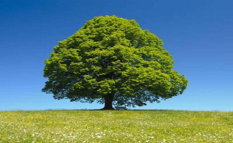 جمعية مدرسي علوم الحياة والأرض بالمغرب تنظم الأسبوع الأخضر 2020