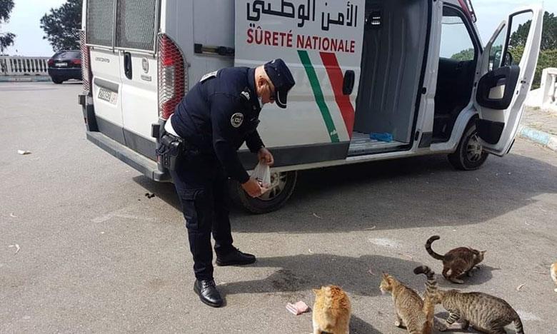 صورة لشرطي بطنجة يطعم القطط والكلاب في فترة الحجر الصحي تثير الإعجاب