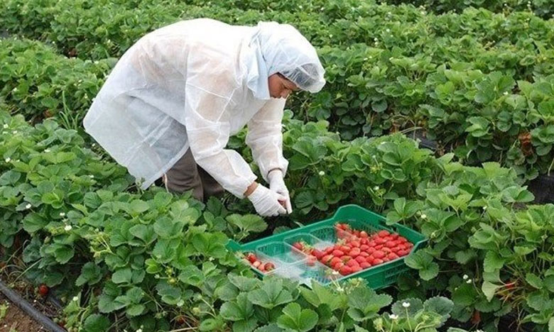 إسبانيا تقترح إخضاع العاملات المغربيات لاختبارات فيروس كورونا قبل عودتهن للبلاد