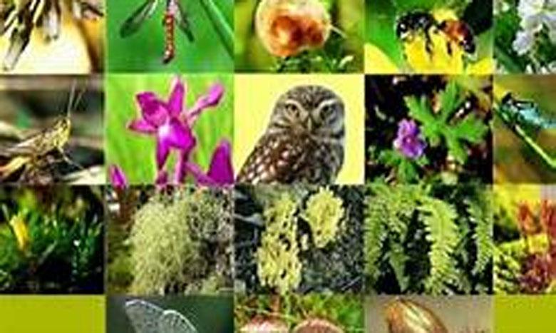 منظمة الأمم المتحدة تشدد على أهمية التنوع البيولوجي في الاحتفاء باليوم العالمي للبيئة