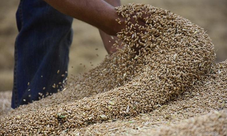 وزير الفلاحة: إنتاج الحبوب بلغ لحد الآن 5 ملايين و700 ألف قنطار