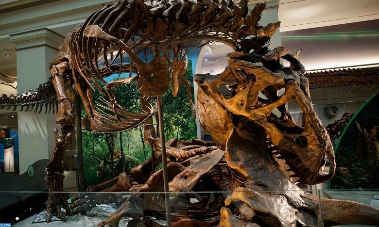 كندا: اكتشاف أول حالة إصابة بالسرطان لدى ديناصور