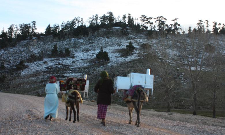قطاع المياه والغابات يوزع 6 آلاف فرن متعدد الاستعمالات في 22 إقليم لمواجهة قساوة البرد