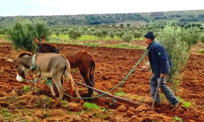 التساقطات المطرية بإقليم آسفي تنعش آمال الفلاحين وتساهم في النمو السليم للمزروعات