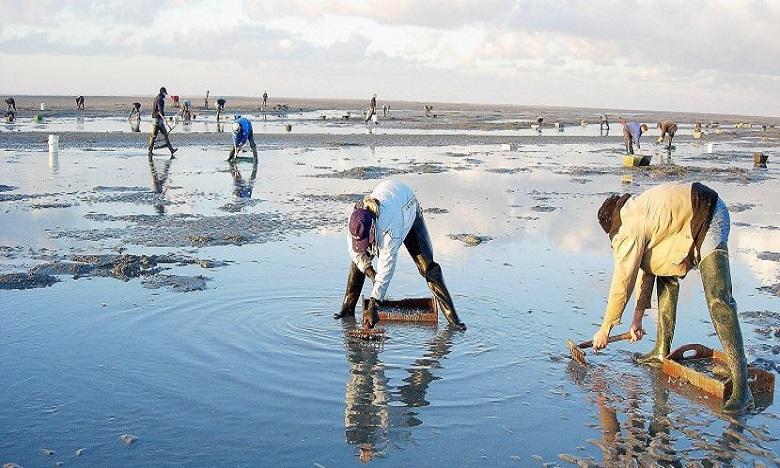 حظر جمع وتسويق الصدفيات على مستوى المنطقة البحرية بأكادير
