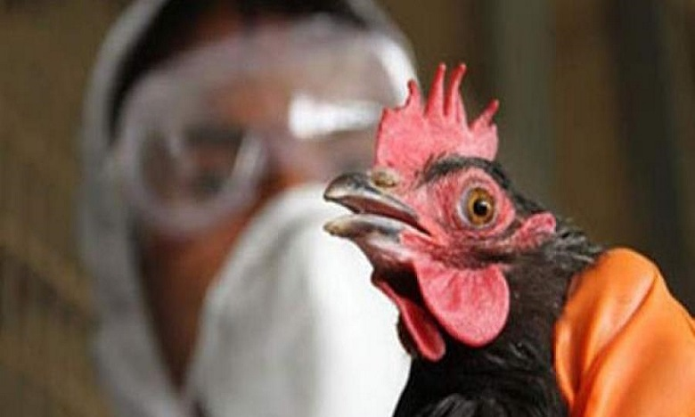 كوريا الجنوبية: تسجيل حوالي 70 إصابة بإنفلونزا الطيور شديدة الإمراض منذ نونبر الماضي