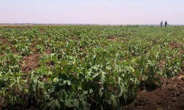 الفيدرالية الوطنية البيمهنية للبذور والشتائل تؤكد أن البذور والشتائل على اختلاف أنواعها خالية من أي تعديل جيني