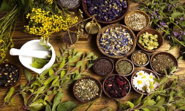 وزارة التربية الوطنية: تمويل 15 مشروعا في مجال النباتات الطبية والعطرية