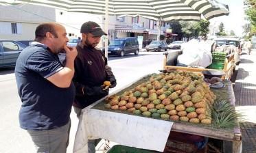 بيع التين الشوكي تجارة هامشية يمتهنها الشباب في شوارع مراكش