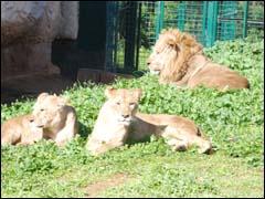 مجتمع حديقة الحيوانات بالرباط للترفيه والتعل م