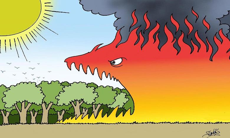 الصيف موسم حرائق الغابات