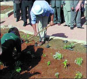 Plus de 600.000 arbres plantés depuis le lancement de l'opération