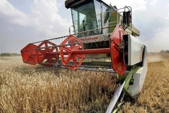 Le cours du blé flambe à l'international