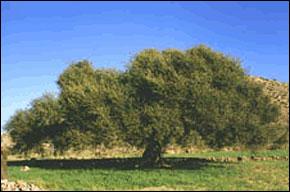 La culture Biologique recourt à des pratiques culturales et d'élevages soucieux du respect des équilibres naturels. Elle se définit par l'utilisation de pratiques spécifiques de production, l'utilisation d'une liste positive et limitée de produits de
