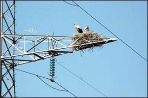 Pour l'accès du monde rural à l'électricité