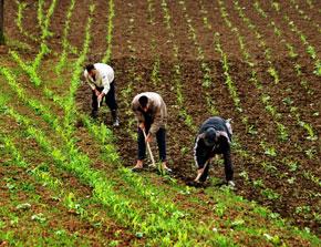 L'approvisionnement en semences sécurisé