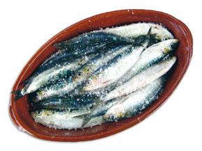 Notre sardine a la pêche …servie par une abondance naturelle