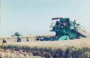 La saison agricole tributaire du ciel