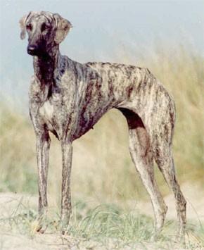 Une race canine, vedette du pôle «élevage et chasse»