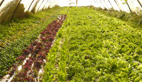 Le développement rapide de l'agriculture sous serre pourrait stimuler le développement de l'industrie agroalimentaire. (Photo : unevalleedanslalune.ouvaton.org)