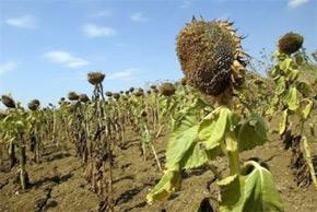 Transformer les préoccupations liées au réchauffement de la planète en changements de comportement. (Photo : actscience.blogspot.com)