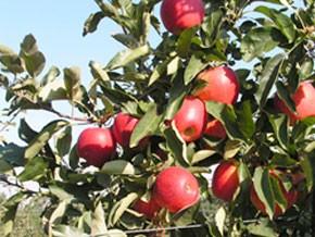 Réunion d'évaluation du projet arboriculture fruitière