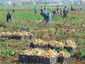 Météorologie et agriculture,  réalisations et perspectives dans la diversité d'accroître la production. (Photo : www.latribune-online.com)