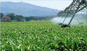 Les trois axes du plan d'action du ministère de l'Agriculture