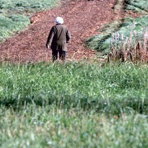 La hausse des prix des composants des engrais est due aux fluctuations de leurs cours sur le marché international.