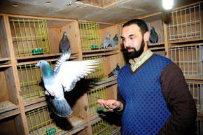 Rachid El Metroufi, vétéran de la colombophilie, partage son savoir-faire avec Yassine Allaoui, jeune débutant.
