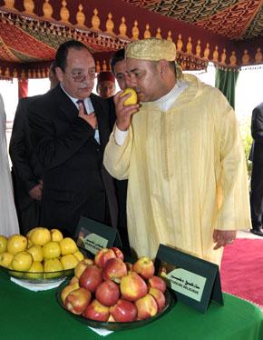 S.M. le Roi examine le projet de développement de la filière pommier dans les zones montagneuses de Béni Mellal pour 50 millions de DH