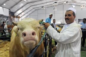 Les banques accompagnent le Plan Maroc vert