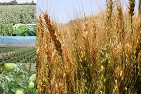 Impact positif sur les cultures d'automne et les arbres fruitiers.
