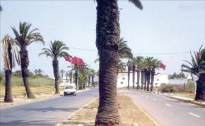 SOS, palmiers en danger!