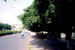 Les arbres situés sur des axes importants n'ont pas été élagués et posent un sérieux problème de visibilité et d'esthétique.