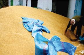 Adoption du décret relatif au recouvrement des droits d'importation du blé