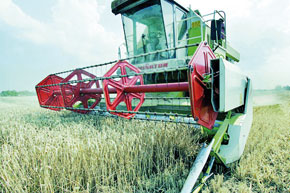 Même si les premières précipitations tardent à venir, le ministère table sur une récolte céréalière de 70 millions de quintaux.