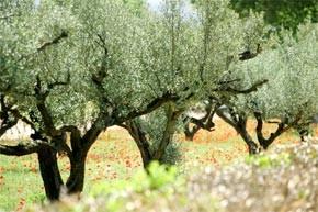 Développement de la culture fruitière