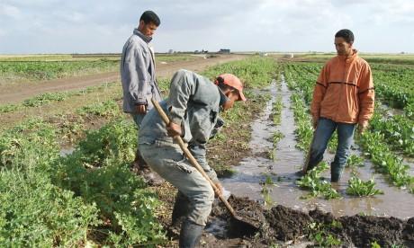 Une opportunité de développement  pour les petits agriculteurs