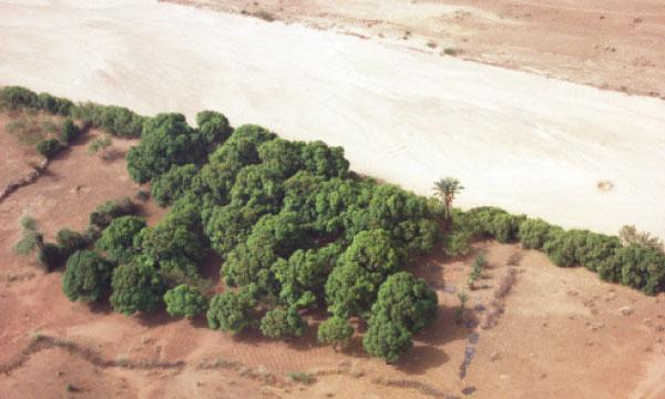 Vers la création d'un Observatoire maghrébin de la sécheresse