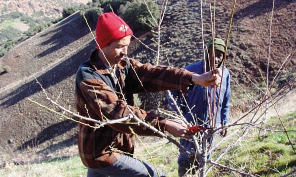 L'arboriculture fruitière vise à remplacer les cultures peu rentables.   Ph. DR