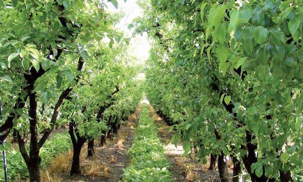 Subventions accordées aux agriculteurs