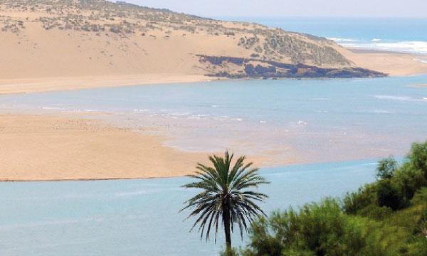Les zones humides occupent une place importante dans l'écosystème mondial.