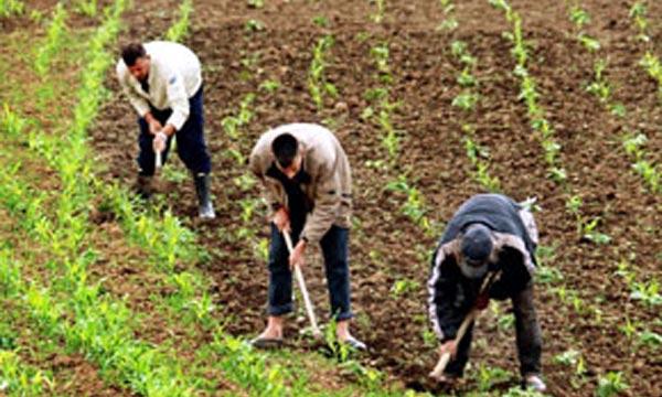 Plus de 120 MDH de subventions accordées aux agriculteurs