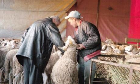 L'offre en ovins et caprins couvre largement la demande