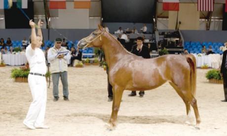 Le Haras Royal de Bouznika domine le championnat  «Modèle et Allures»