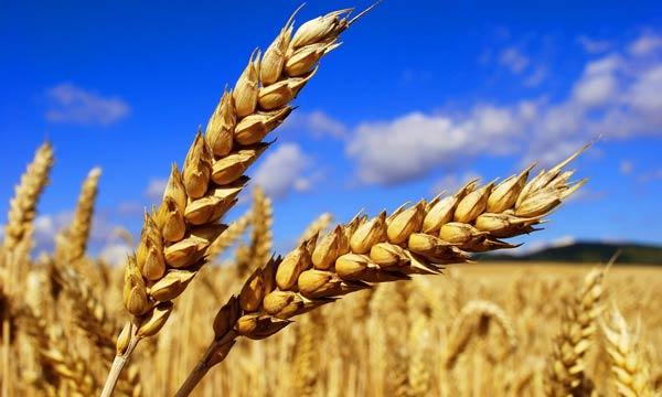 L'État débloque 2,7 milliards de DH pour soutenir les agriculteurs