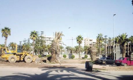 Palmiers en péril à la cité des fleurs