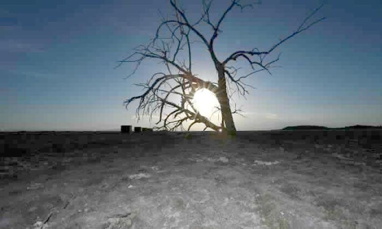 Des hectares de forêt décimés à perte de vue. La sécheresse fait des ravages en Californie. 12,5 millions d'arbres morts. Ph : i24news.tv