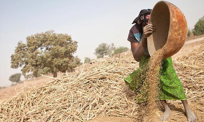 Dans la dynamique de la reconstruction économique du Mali, la FAO stimule la relance de la production agricole dans le nord du pays. Ph : afrique7.com